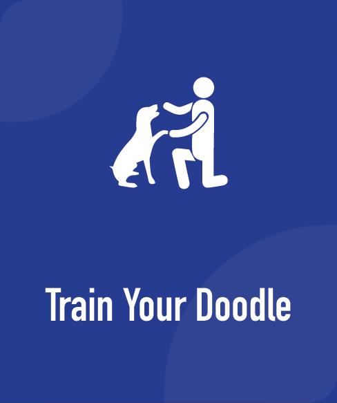 train your doodle